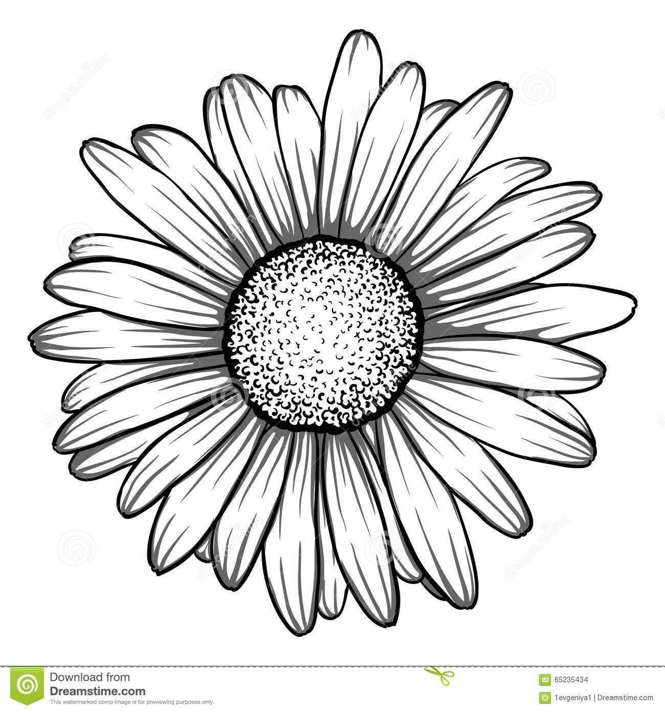 pingl par sur tattoo pinterest dessin marguerite dessin et dessin fleur. Black Bedroom Furniture Sets. Home Design Ideas