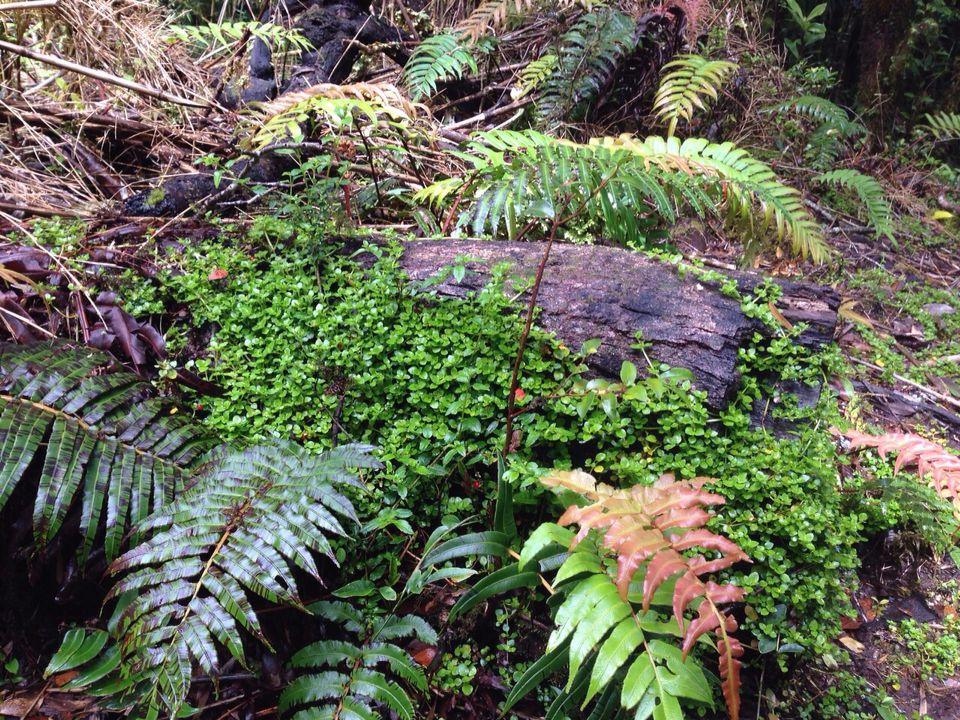 Vegetación lugareña Carretera austral, chile