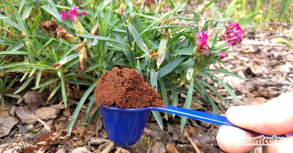 8 Anwendungen Fur Kaffeesatz Im Garten Bitte Nicht Wegwerfen Mit Kaffeesa Kaffeesatz Gartendunger Schnecken Im Garten