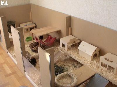 comment fabriquer une cabane pour cochon d 39 inde. Black Bedroom Furniture Sets. Home Design Ideas
