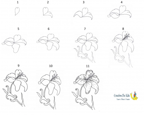 How to draw a Lily?stepbysteptutorial Lilies drawing