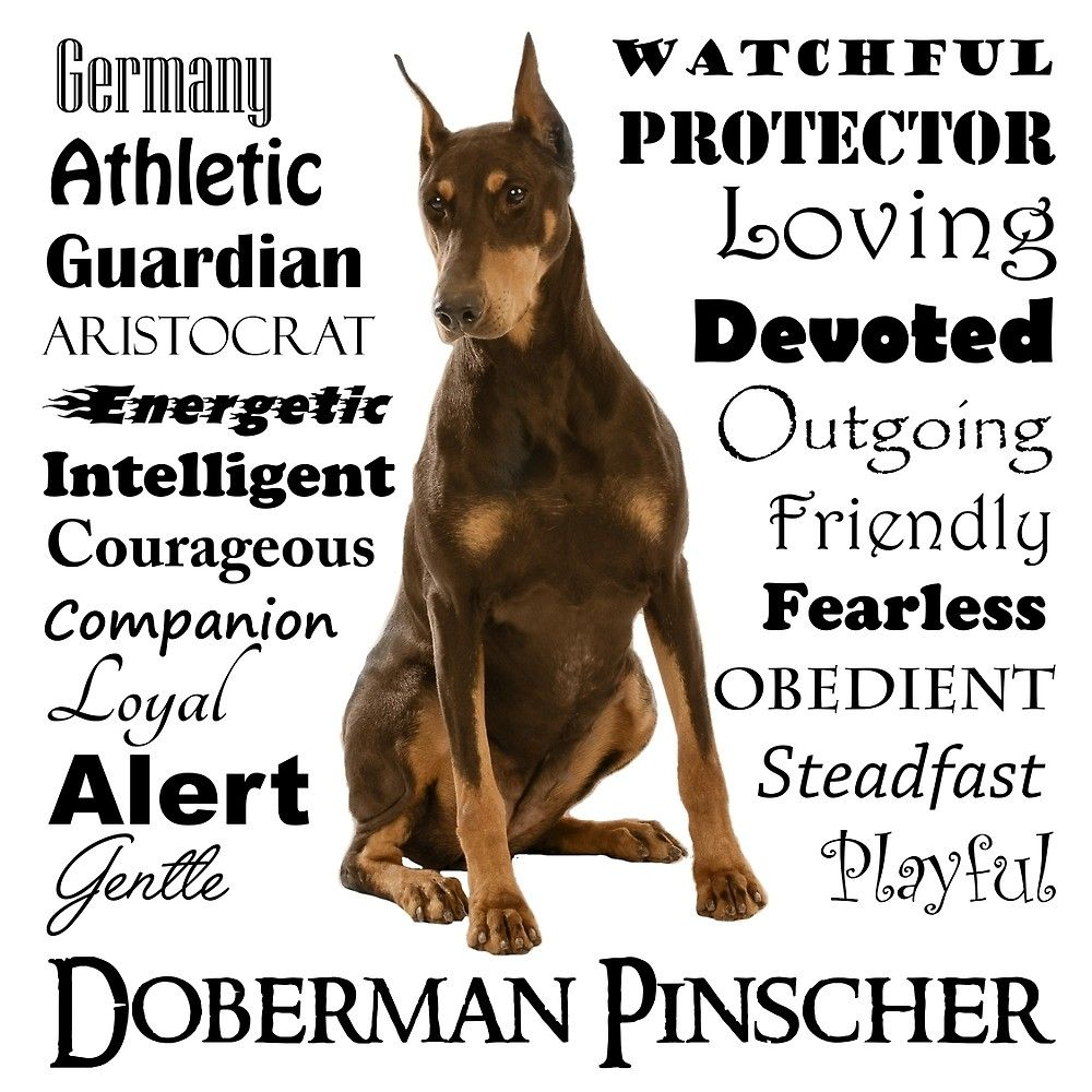 Red Doberman Traits By Doglove Doberman Doberman Pinscher Red