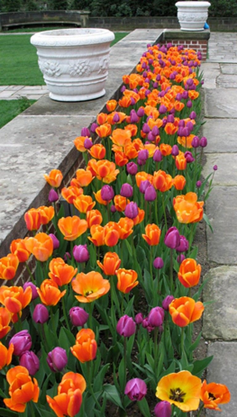 24 Wonderful Tulips Arrangement Tips For Your Home Garden Ideas Page 23 Of 26 Tulips Arrangement Tulips Garden Design Garden Front Of House