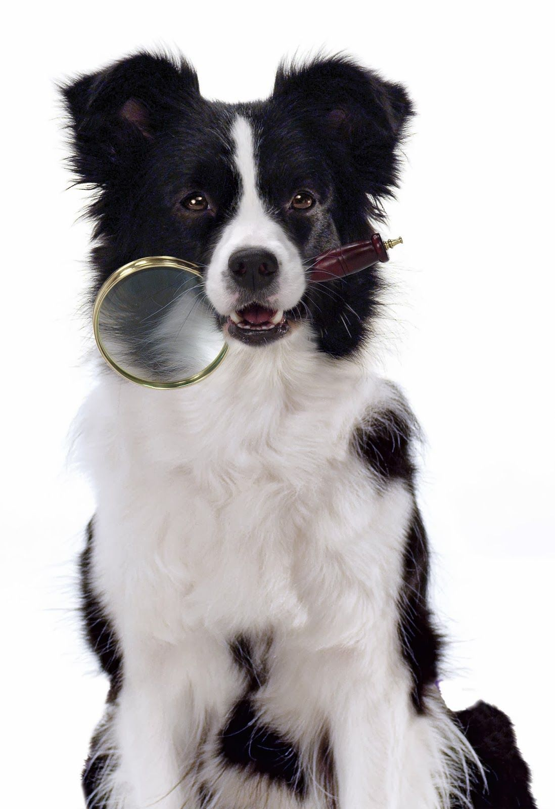 What S In Your Dog S Food Checkyourbag Then Get Wellness Plus A 5 Coupon Coupon Pets Healthy Pet Food Wellness Pet Food Food Animals