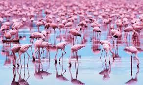 И как кому-то может не нравится розовый цвет? | Фламинго