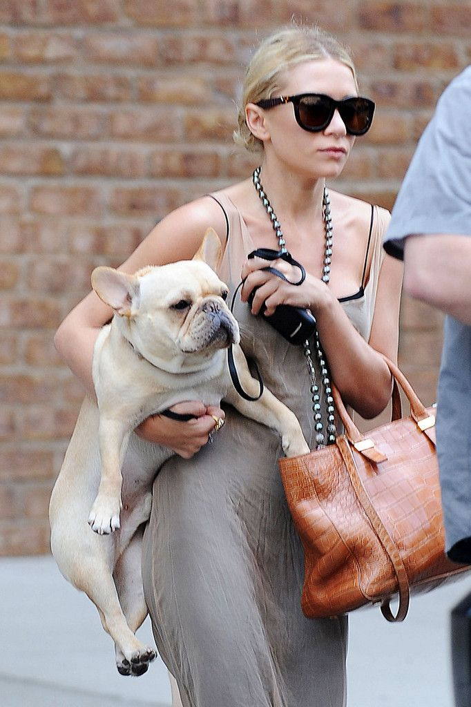 30 Celebrities With French Bulldogs Bulldog, Taylor