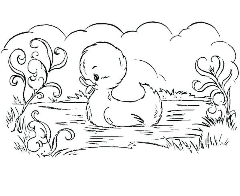 Cute Collection Of Duck Coloring Pages Free Coloring Sheets Easter Coloring Pages Coloring Pages Animal Coloring Pages