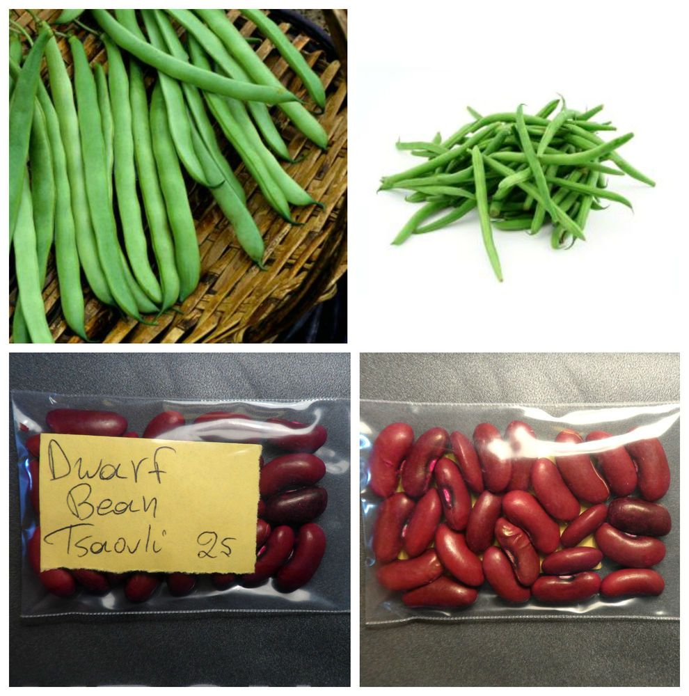 Details About Dwarf Red Long Yard Bean 25 Top Quality 400 x 300
