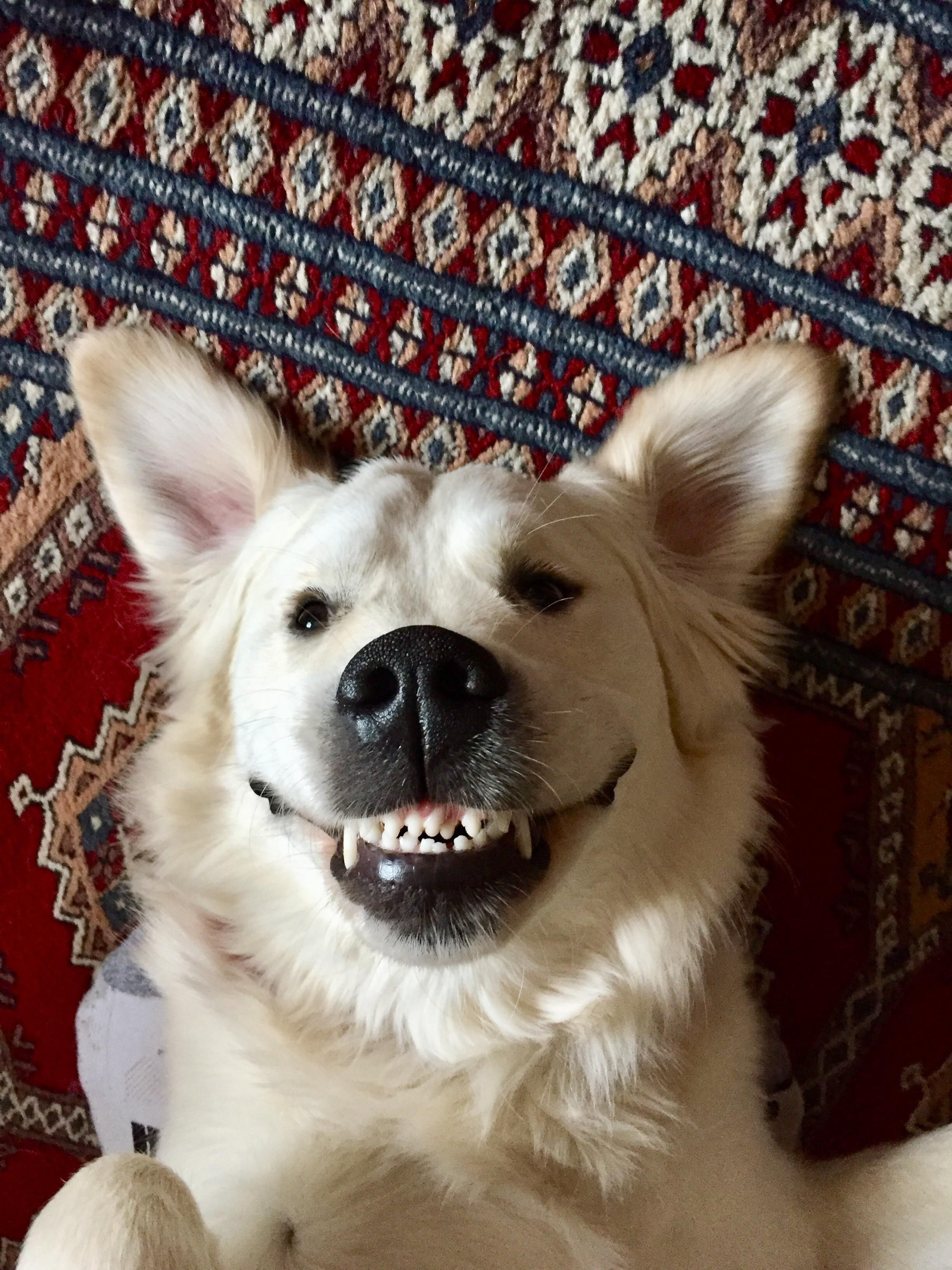 His crooked teeth give him a pretty derpy smile... https