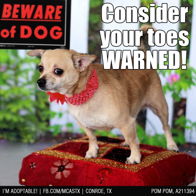 Beware Of Dog Lol Adopted Funny Dogs Dogs I Love Dogs