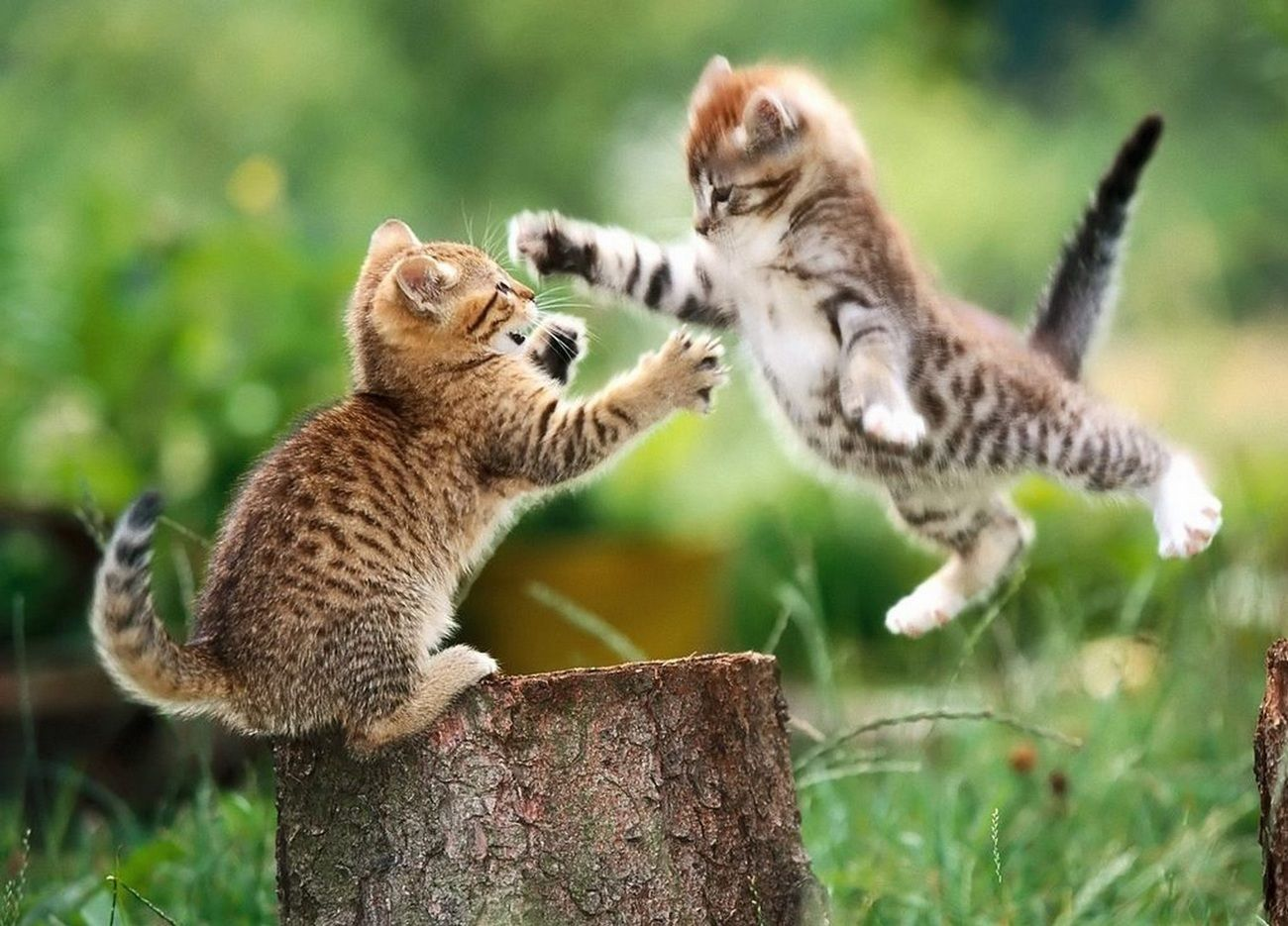 3 Strategies For Dealing With Startup Competition Danmartell Startup Growth Hacking Kittens Cutest Funny Cat Wallpaper Cute Animal Pictures