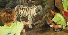 Busch Gardens Tampa Bay Educational Programs Summer Camp