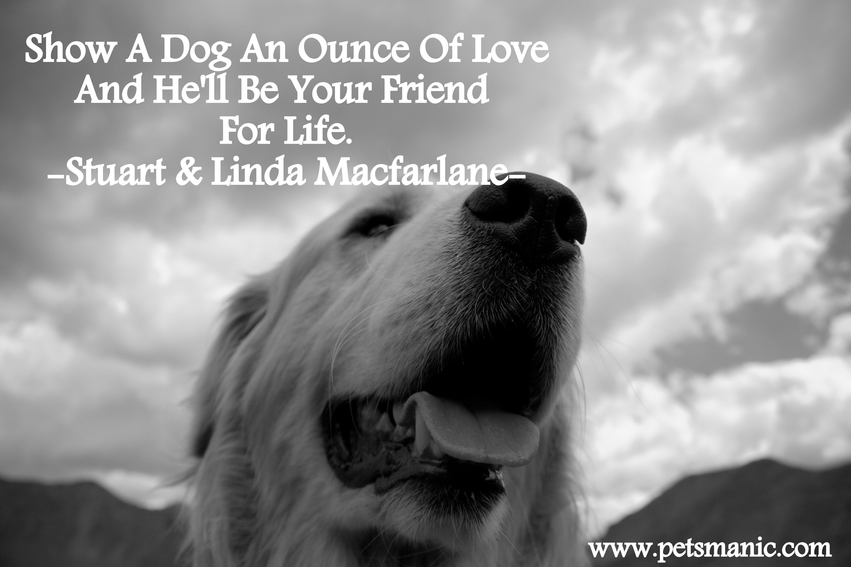 Animal · For Dog Love Quotes Tumblr