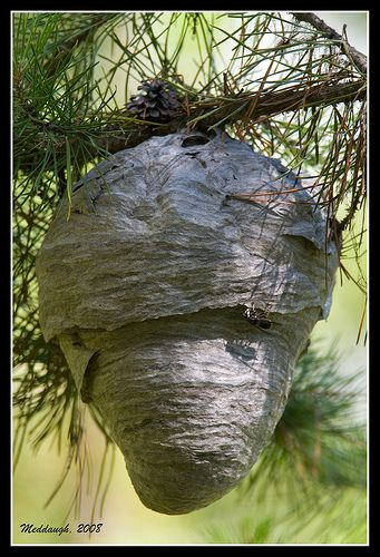Beehive   by Meddaugh Photography