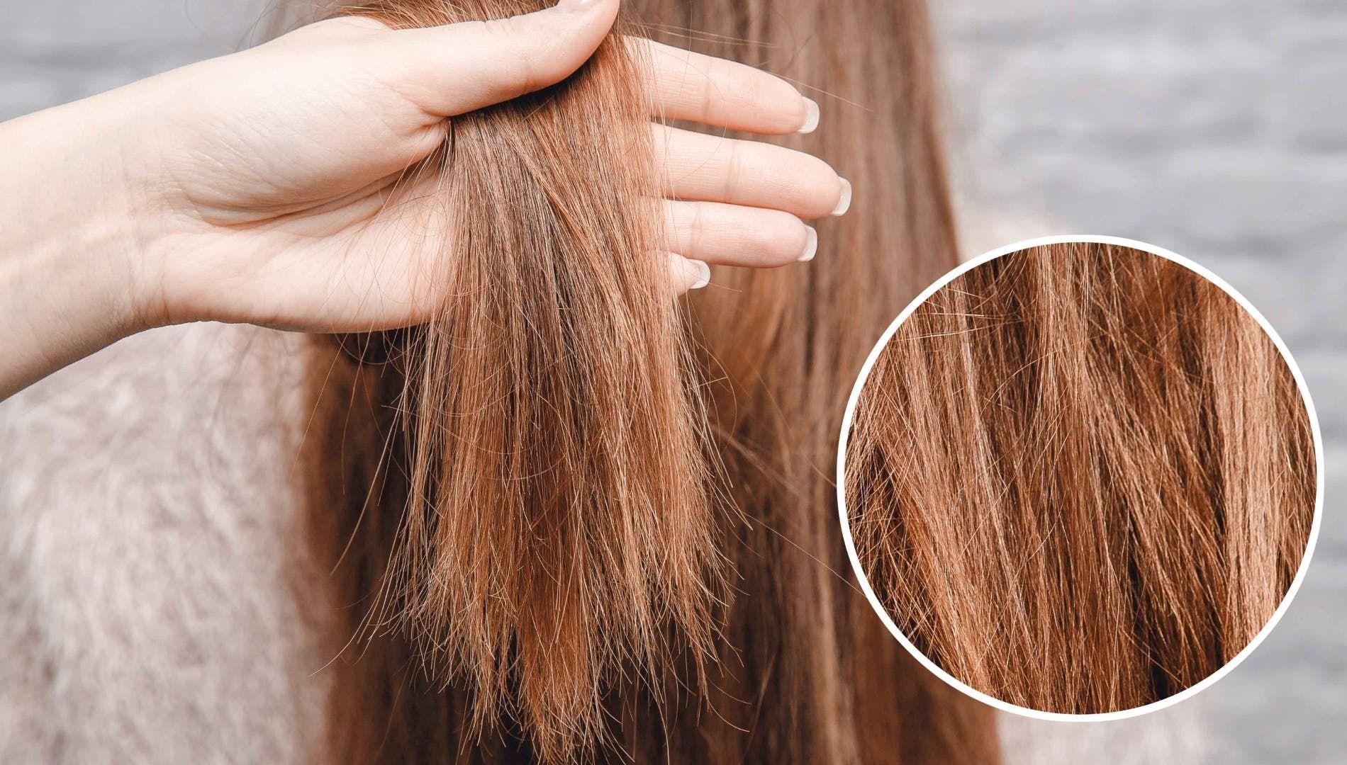 طريقة فعالة لعلاج الشعر التالف Hair Repair Treatments Stop Hair Breakage Hair Repair