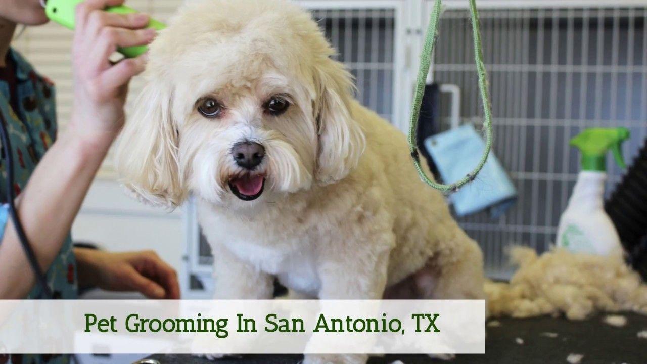 Pet Supplies Plus Offers Pet Grooming In San Antonio Tx Bathing