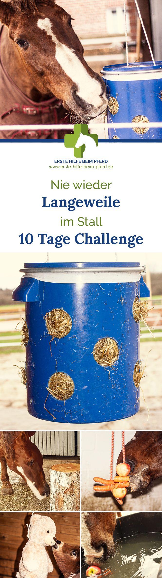 List of Latest DIY Gegen Langeweile from erste-hilfe-beim-pferd.de