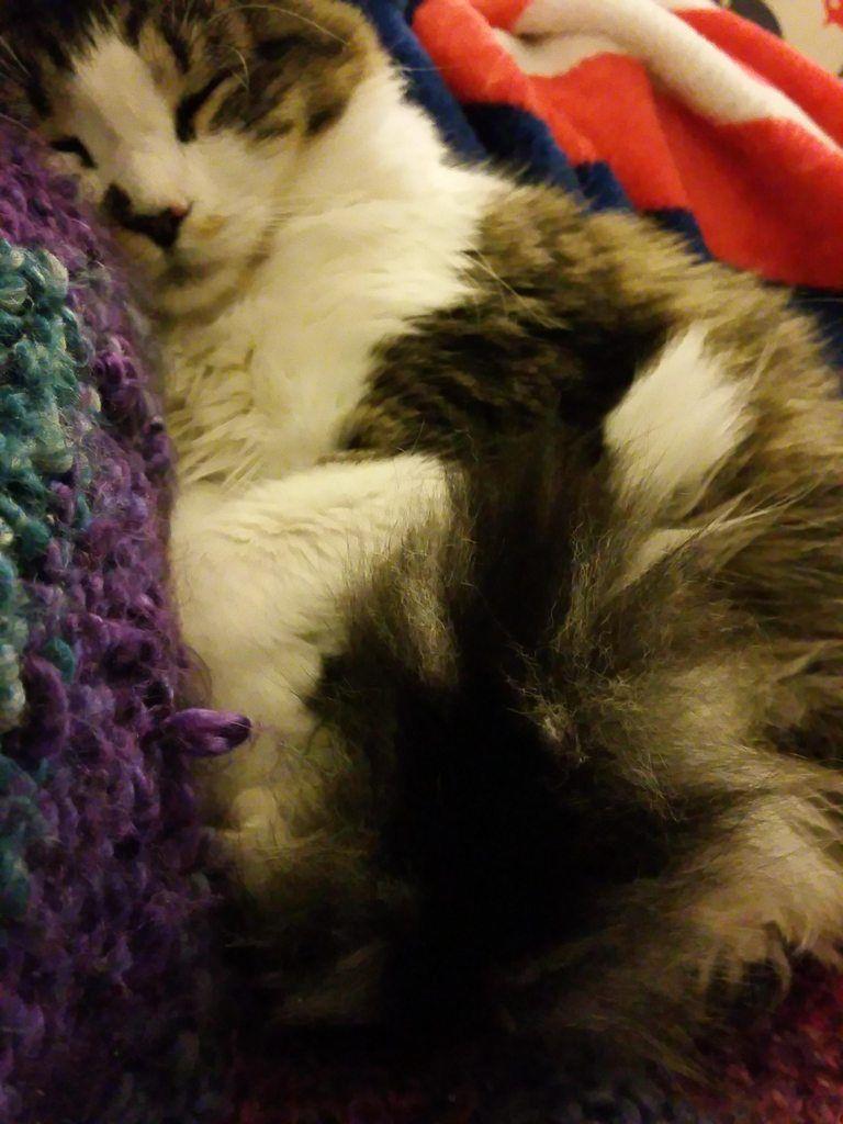 My lump of fluff Luna Foxy Kitty.