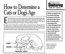 How to Determine a Cat's or Dog's Age Dog ages, Pet