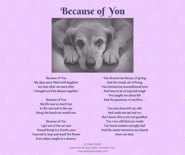 Pet Loss Poems Celebrating the Love and Lives of Our