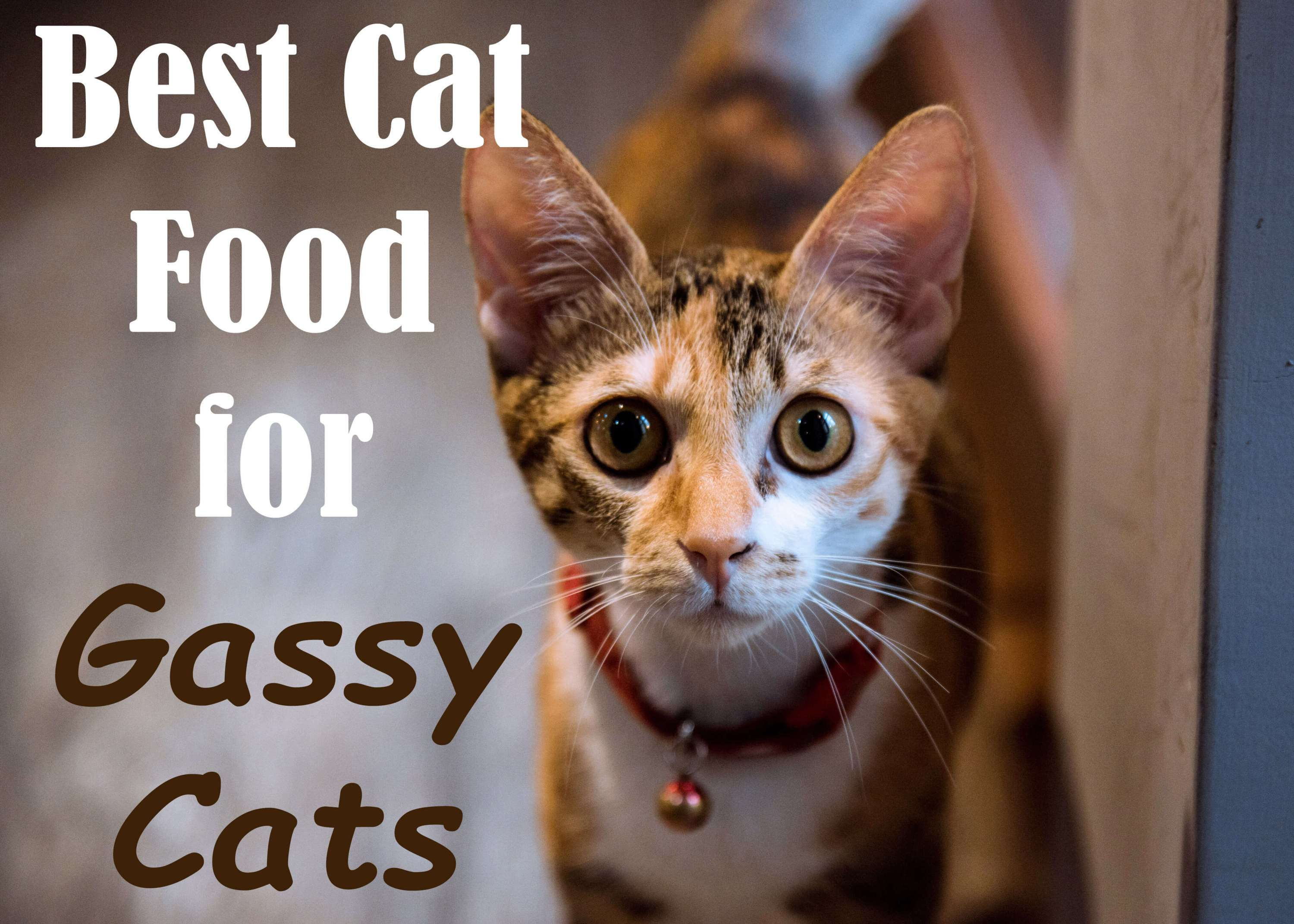 6 Best Cat Foods For Gassy Cats Review Causes Treatment 2020 With Images Cat Food Best Cat Food Cats