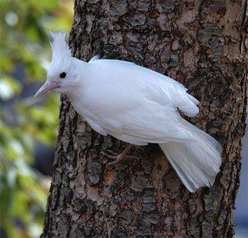 Pin By Gary Leffler On Albino Rare Albino Animals Albino Animals Animals Beautiful