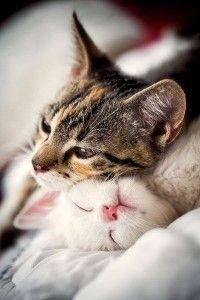 CATS' SECRETS - discover new Edrac`s blog! blog.carde-app.com