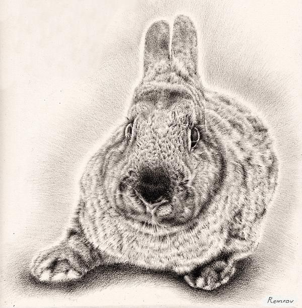 Bunny drawings bunny portrait 3 by remrov vormer find this pin and more on fine art america