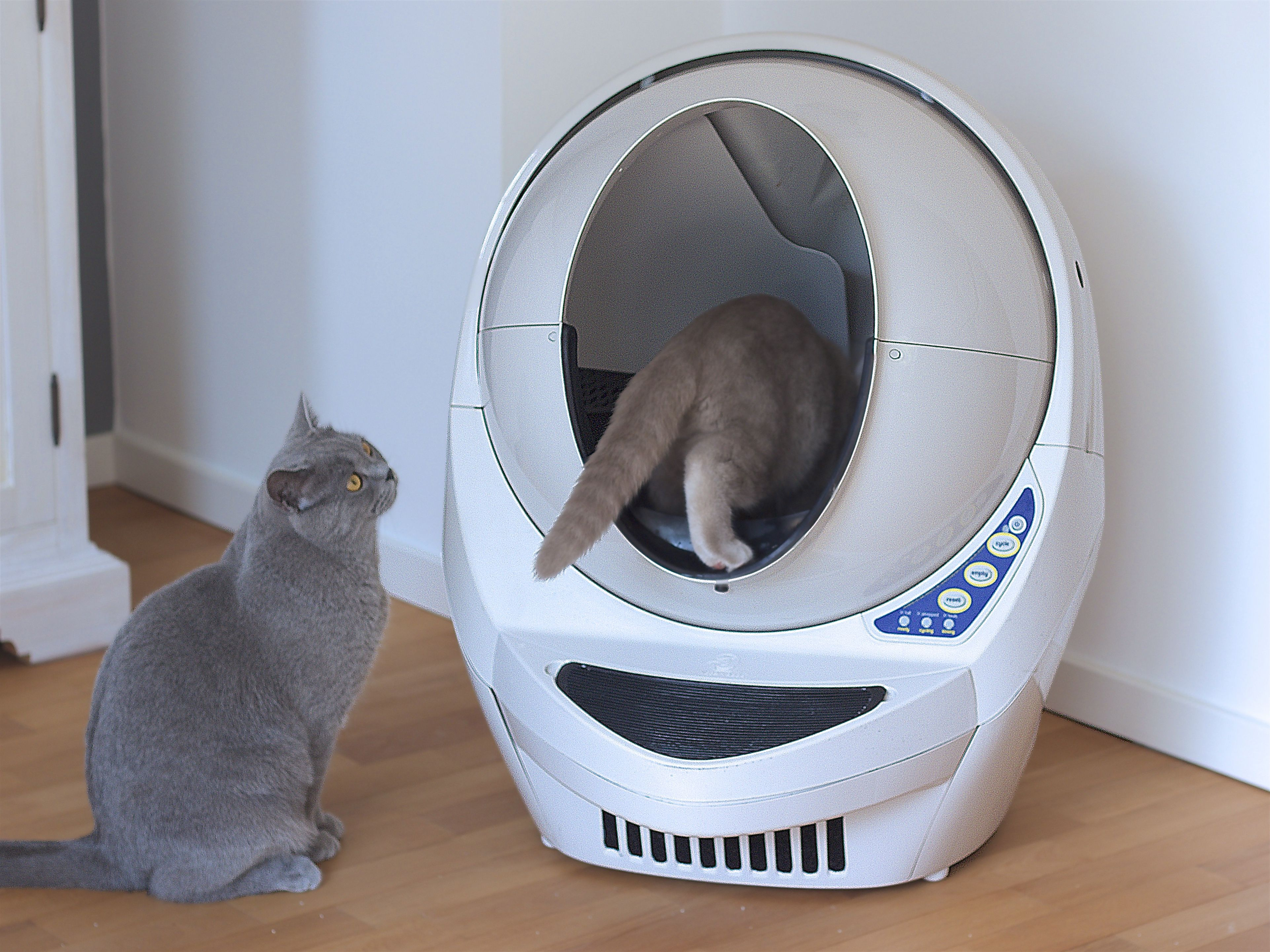 British Shorthairs Litter Robot 3 Cleaning Litter Box Self Cleaning Litter Box Litter Box