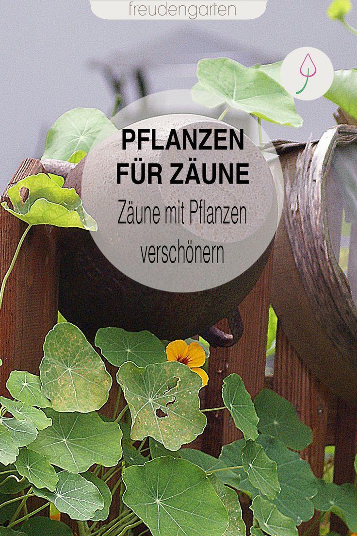 Zaun mit Pflanzen verschönern