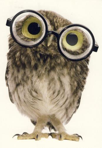 Chouette lunettes hiboux et chouettes chouette chouette hibou et lunettes - Dessin de chouette facile ...