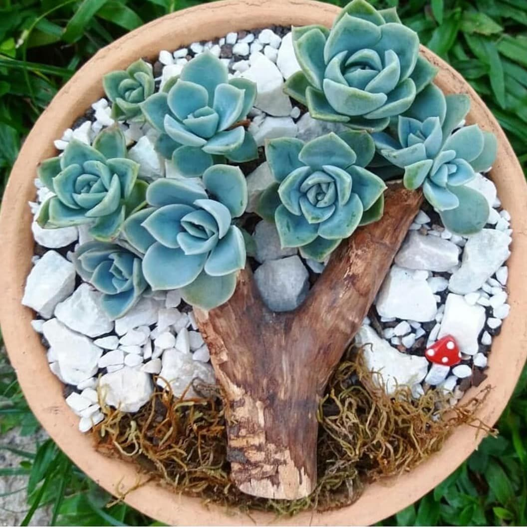 60 Simple Succulent Diy Ideas For You
