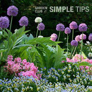 5 Favorite Fall-Planted Flower Bulbs | Garden Club