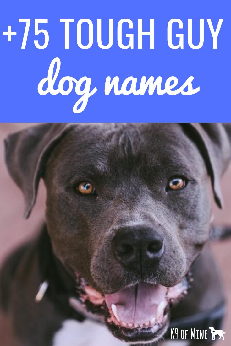 K9 Of Mine Home Dog Training Breed Profiles Product Reviews Tough Dog Names Dog Names Girl Dog Names