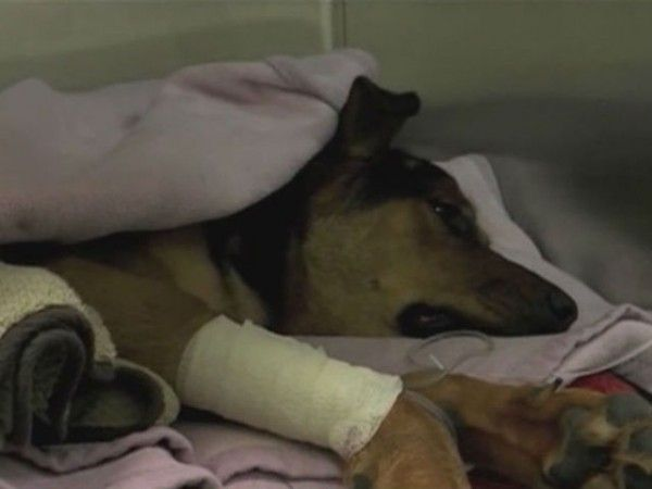 Prosecute Callous Owner That Abandoned Paralyzed Dog On Palm Beach