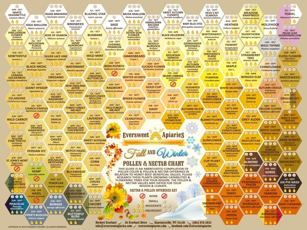 Fall winter pollen color  amp nectar chart for honeybees to order this also pin by eversweet apiaries on charts rh pinterest