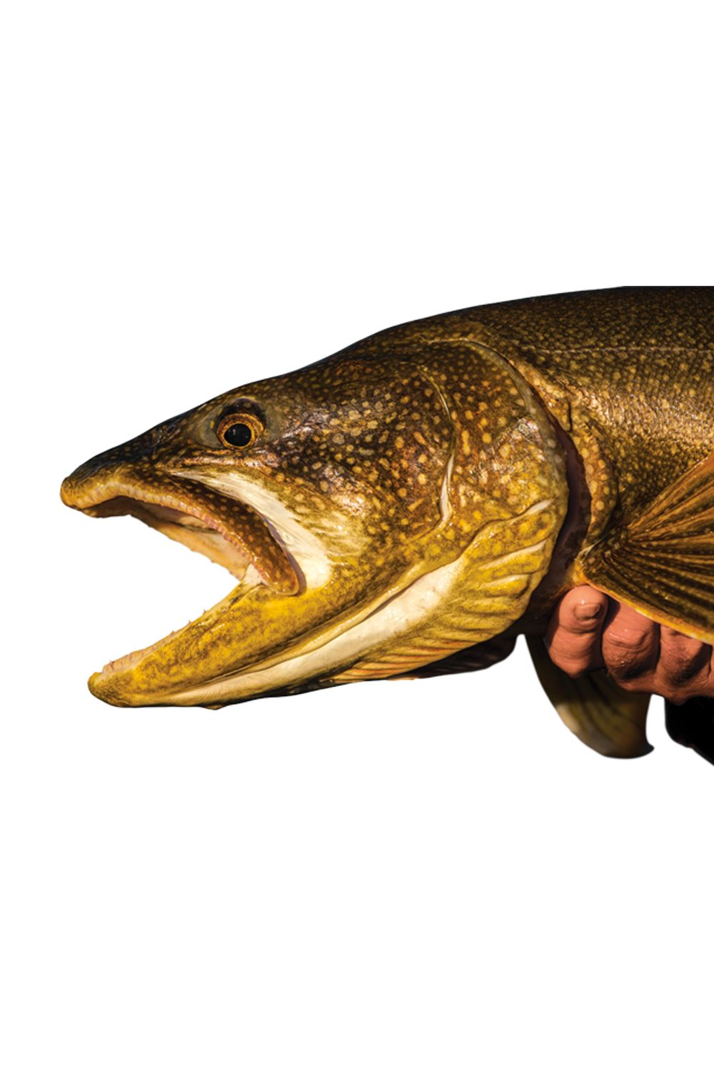How to catch a lake trout from shore lake trout fishing