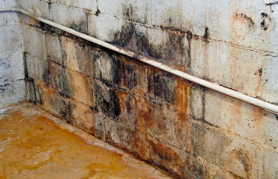 Basement Insulation Mistake Be Sure To Avoid This 1 Problem Mold In Basement Basement Insulation Basement Walls