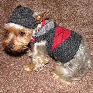 Diy Dog Sweater Out Of Your Old Sock Or Shirt Also A Diy Coat
