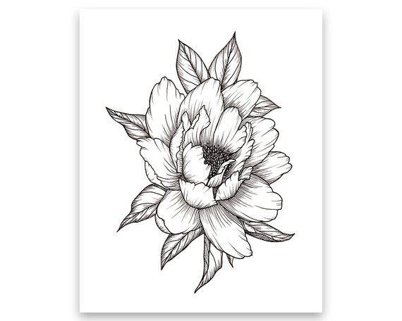 dc8be6d66 Peony Flower, Art PRINT of Pen Illustration, Flower Drawing, Floral Tattoo,  Botanical