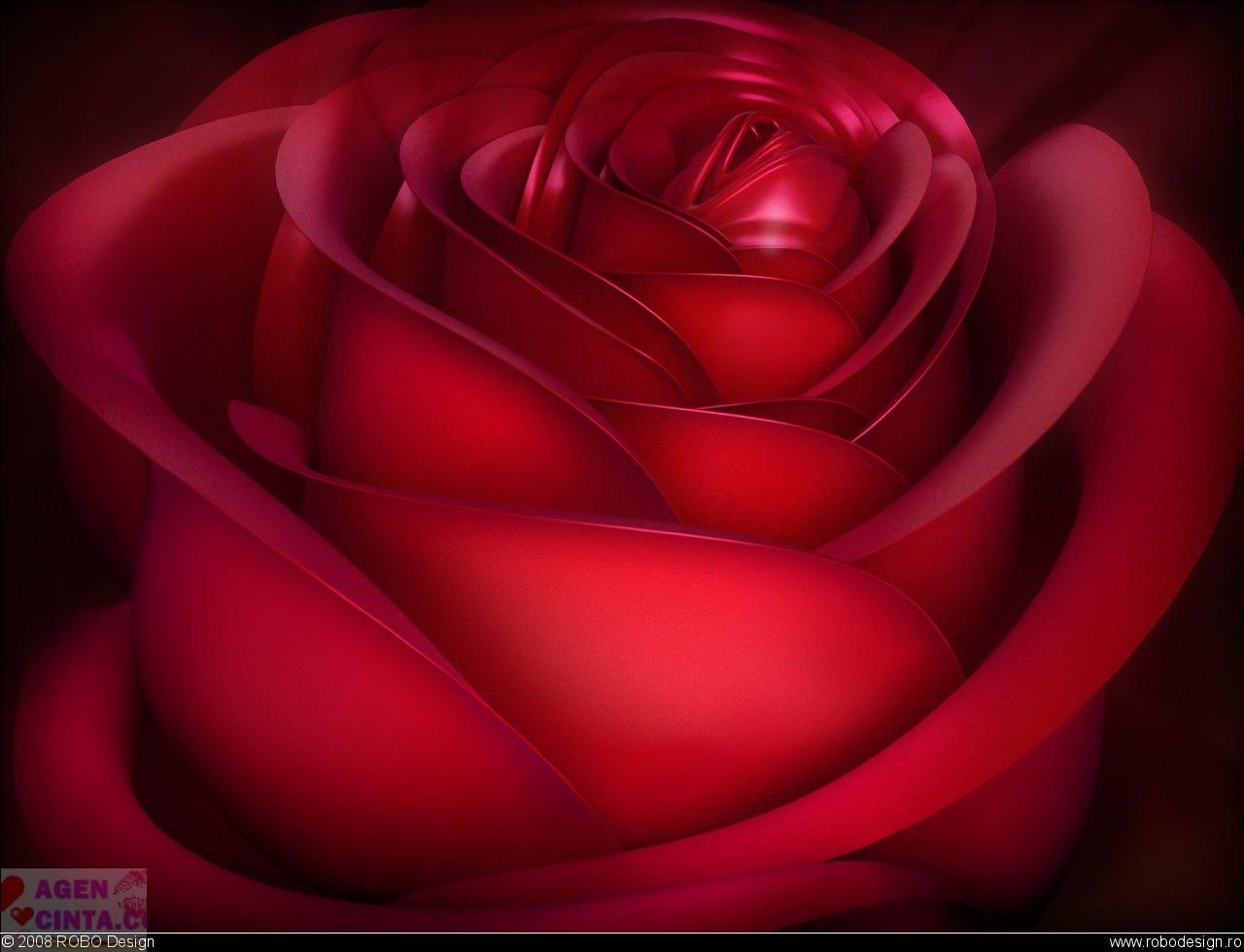 Foto Wallpaper Mawar Merah Terbaru Yang Cantik Lucu Dan
