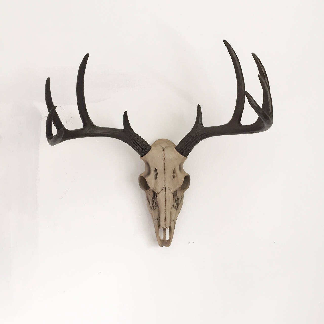 Fake Deer Skull And Antlers Pin By Suddenlysarah On Spare Bedroom In 2019 Faux