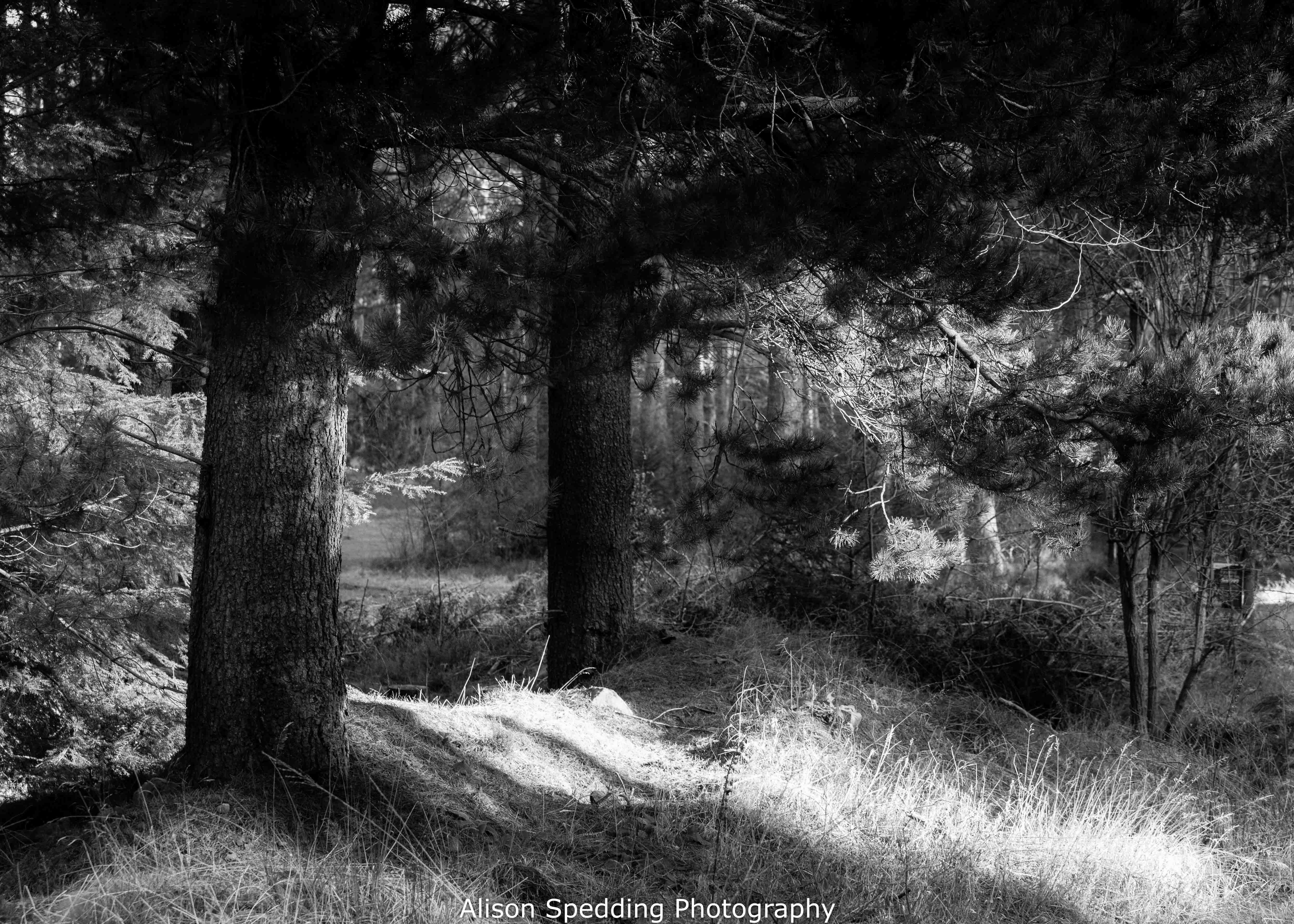 #woodland #blackandwhitephotography #trees #forest
