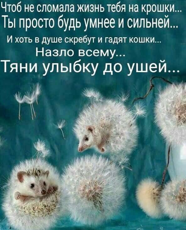подборка открыток о жизни