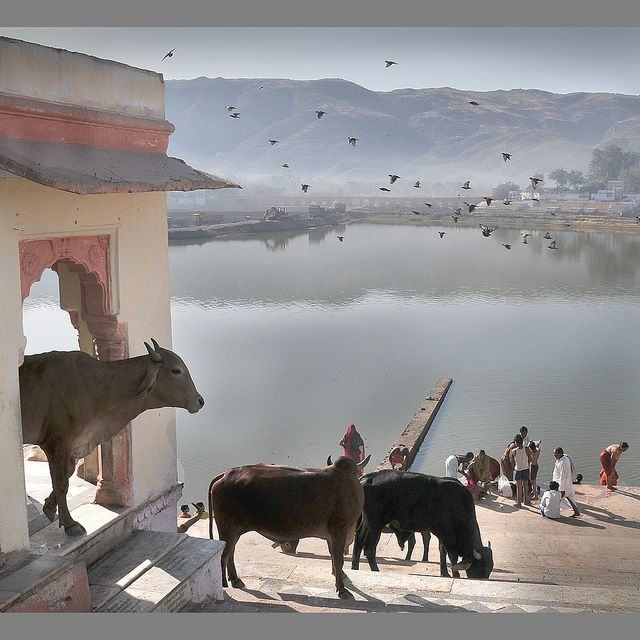 Early Morning In Pushkar In 2019