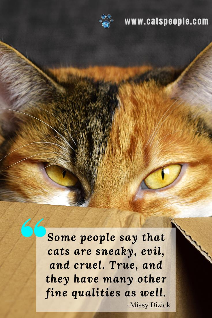 Funny Cat Quote In 2020 Cat Quotes Cat Quotes Funny Cat Parenting