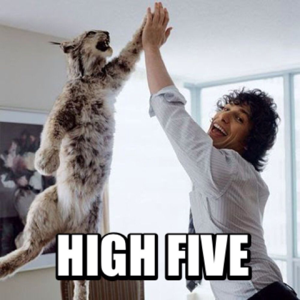 High Five Meme Funny Animals Funny Animal Pictures Funny Pictures