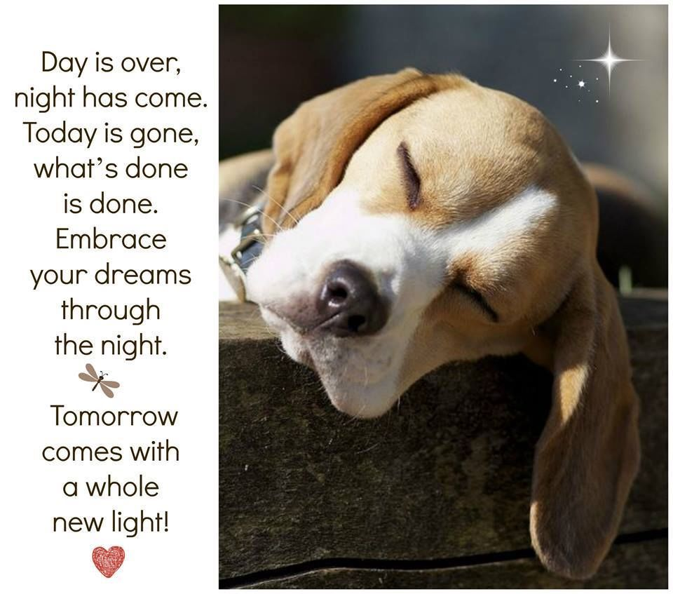 Day Is Over Night Has Come Goodnight cute dog goodnight ...