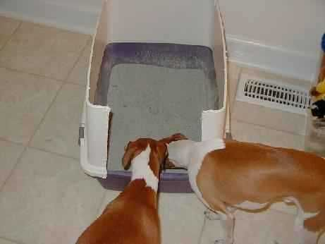 Tips For Litter Box Training Your Dogs Training Your Dog
