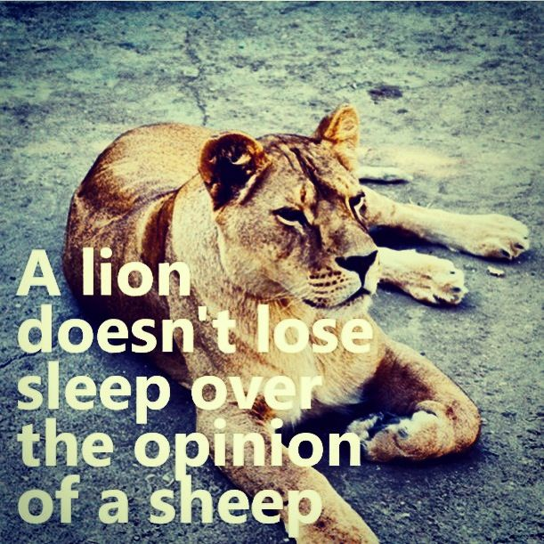 Lion Strong Wise Lion Quotes Lion Sleepover